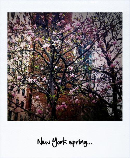Spring- primavera!
